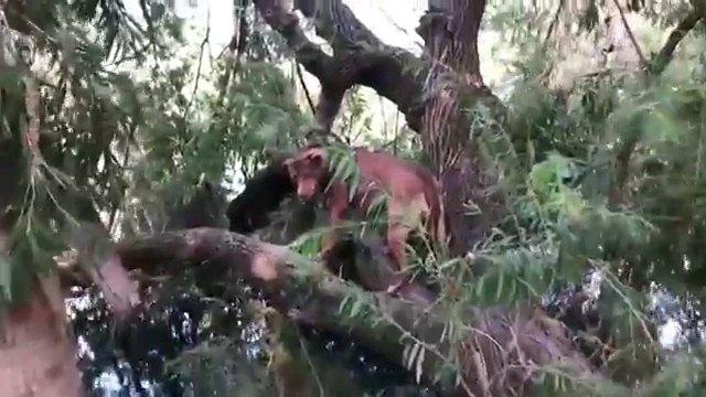 なんでこんなことに!?木の上にいるワンちゃん
