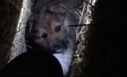 北海道にいる野犬を『家族』に迎えた時の話