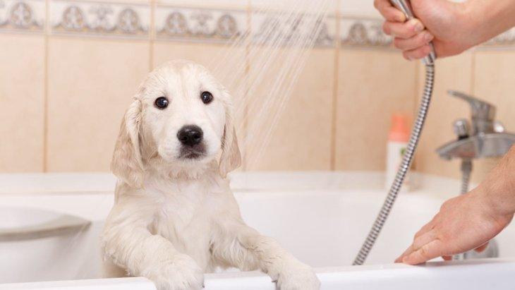 犬に絶対してはいけない『シャンプーの仕方』5選!正しい方法は?