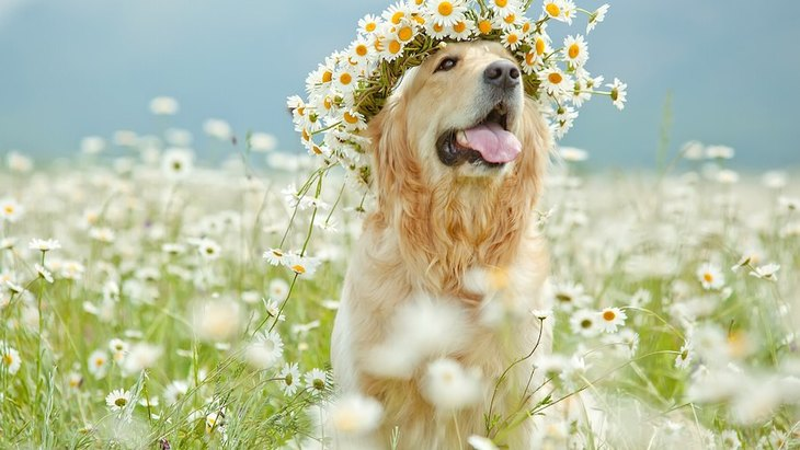 愛犬が亡くなった時のために 自宅で『エンゼルケア』を行う方法