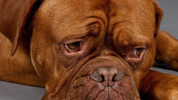 犬が嫌いなものってなに?どんな時にストレスを感じるの?