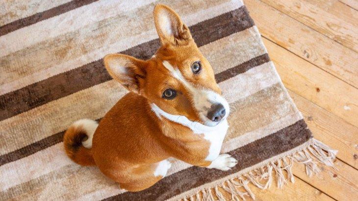 室内で犬を飼う時に絶対やってはいけない『部屋づくり』5選
