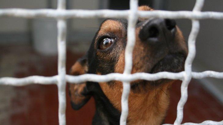 デートアプリをヒントに、犬の譲渡マッチングアプリが作られた!