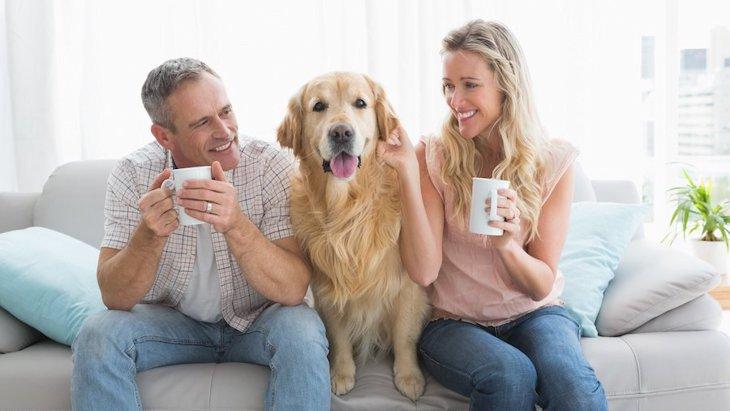 犬を飼うことはカップルの絆を強くする?イギリスのリサーチ結果
