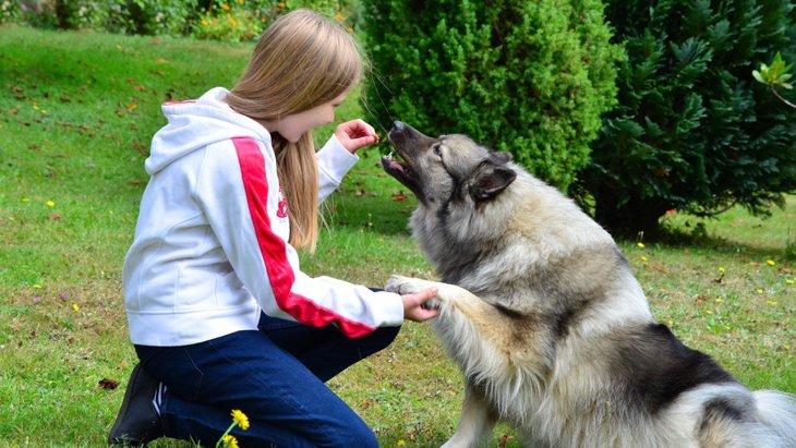 犬がおやつ無しでは言うことを聞かない!改善する3つの方法