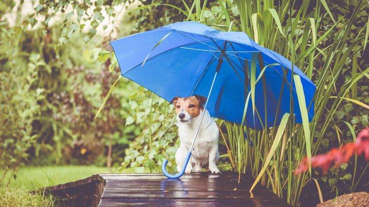 『雨の日に犬の散歩をする工夫』3選