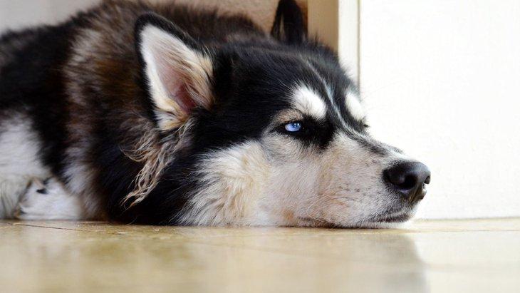 犬が『イライラ』している時に見せるサイン5選