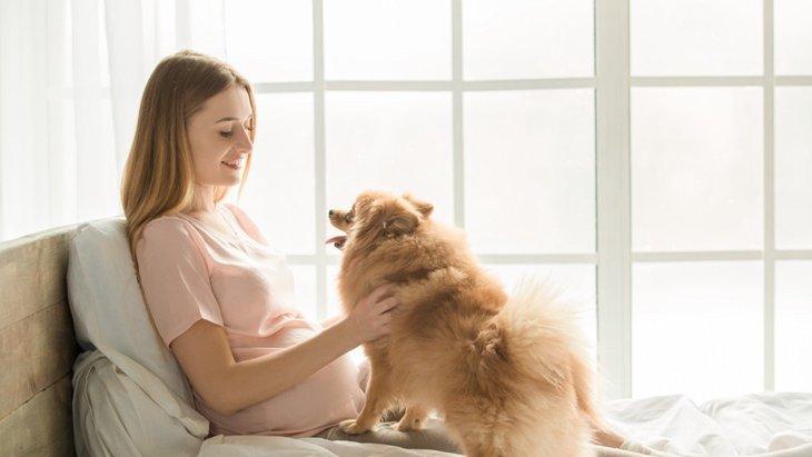 妊娠中に犬を飼う時の注意点と考えられるリスク