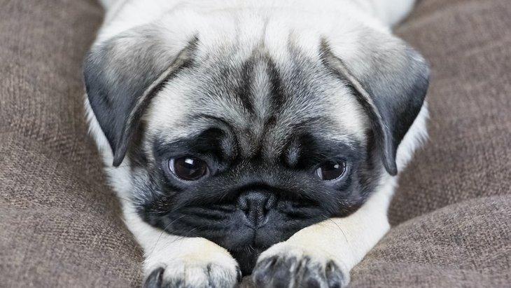 犬のストレスに繋がっている飼い主の行動3選