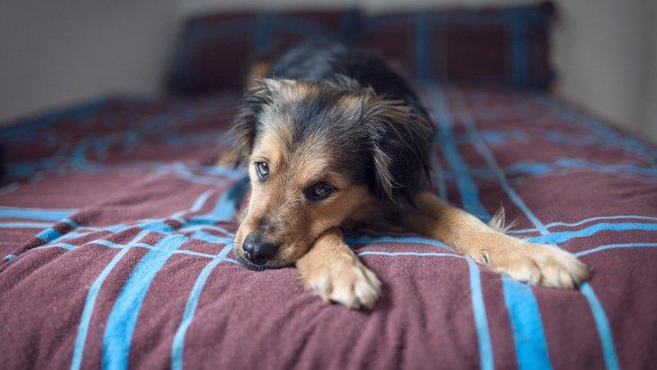 寝たきりの老犬のためにできるご飯を与える時のポイント5つ
