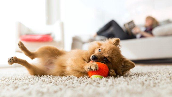 家でできる!犬に効果的なエクササイズ3選