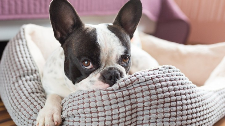 『体臭が強い犬種』5選!飼う時に気を付けるべきことやケア方法は?