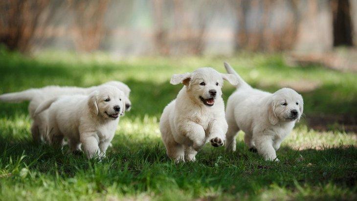 犬の性格が決まる『2つのタイミング』とは?