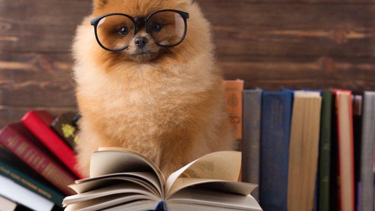 仕組みが知りたい!犬の記憶力ってどれくらい?