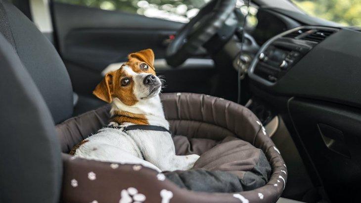 犬が『車酔い』してる時の仕草や行動7つ!愛犬のサインを見逃さないで!