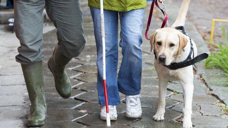 盲導犬に適した犬種とは?その理由や仕事について