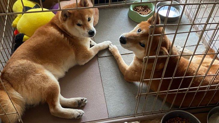 【奇跡的な再会】最初の出会いから2ヶ月後、ついにお迎えできた保護犬