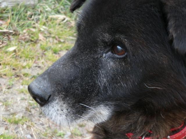 現代に起きる深刻な問題、高齢者が老犬を介護する「老老介護」