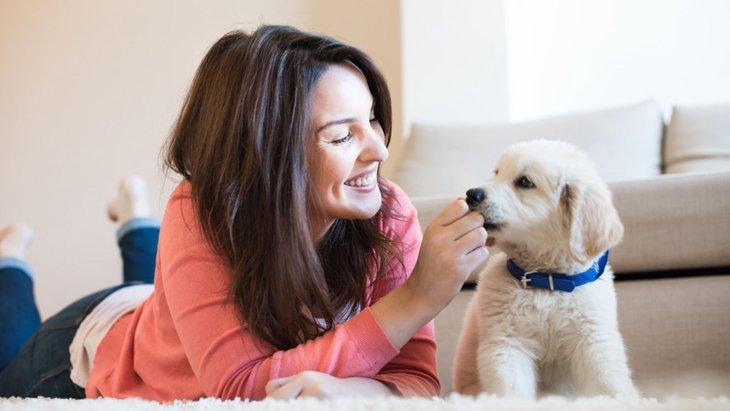 犬を飼うと健康になれる4つの理由