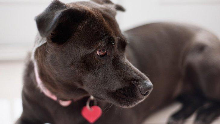 犬の鑑札とは?つけるメリットや必要性について