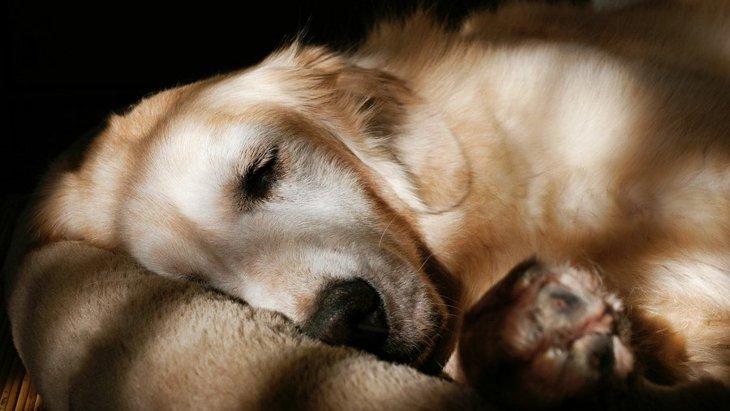 犬が寝たきりになった時、床ずれの防止と老犬の介護の方法について