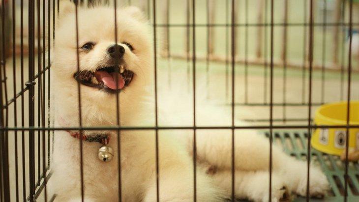 犬を留守番させる時、多頭飼いの方がいいの?
