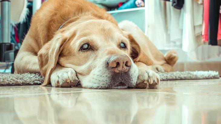 犬の「隠れ老化」サイン5選!ちょっとした行動の変化も見逃さないで