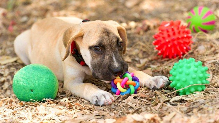 犬がプラスチックを食べた!危険性と対処法