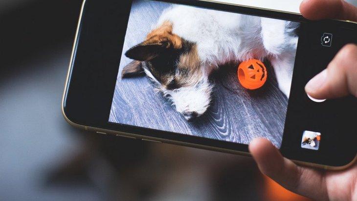 犬が撮影を始めると可愛い仕草をやめてしまう理由4つ