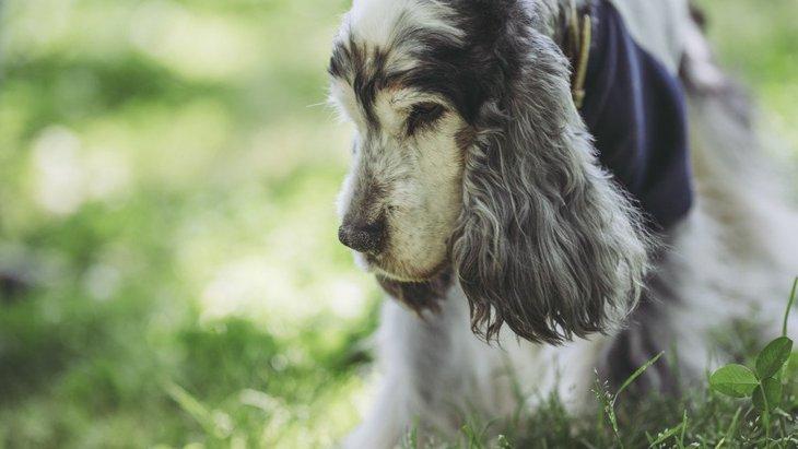 犬の16歳は人間でいう何歳?老犬の寿命や元気に長生きする秘訣とは