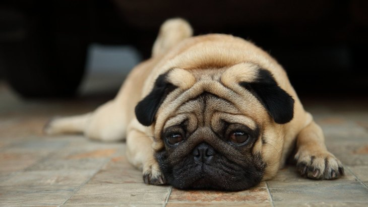 犬の『気分が悪いサイン』6選 適切な対処法とは?