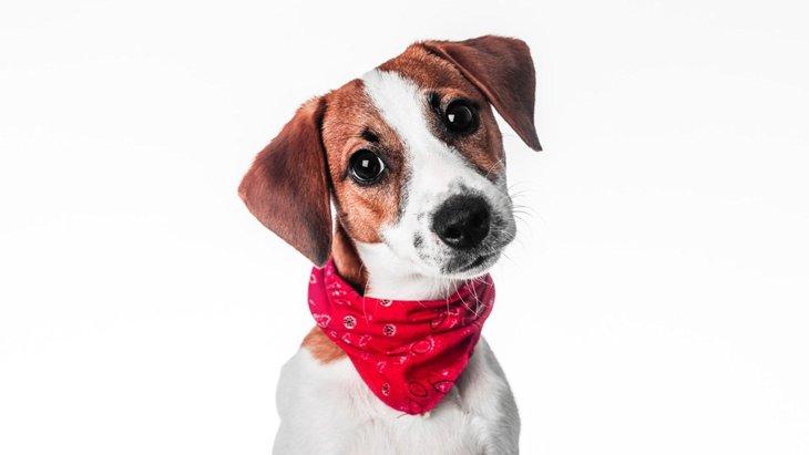 犬に警戒心を抱かせてしまうアイテム