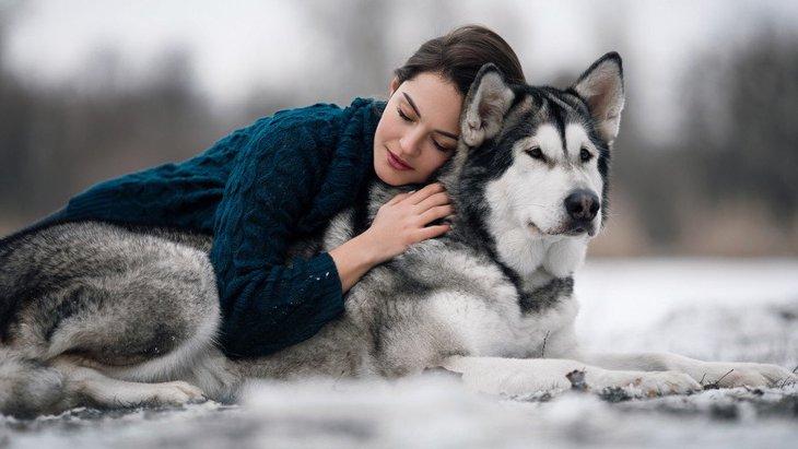 愛情表現が下手くそな犬がしている5つの態度