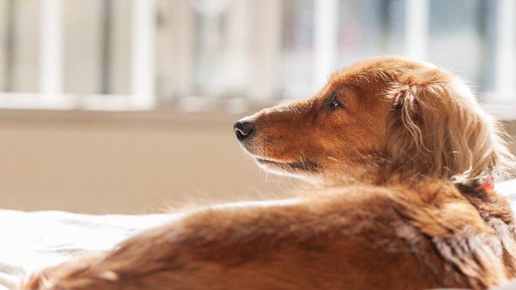 犬の『ナルコレプシー』とは?その症状と正しい対応6選