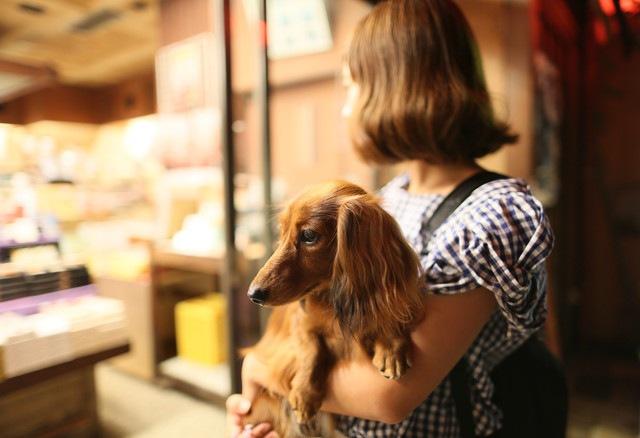 愛犬との夜のお散歩で役立つグッズ5選