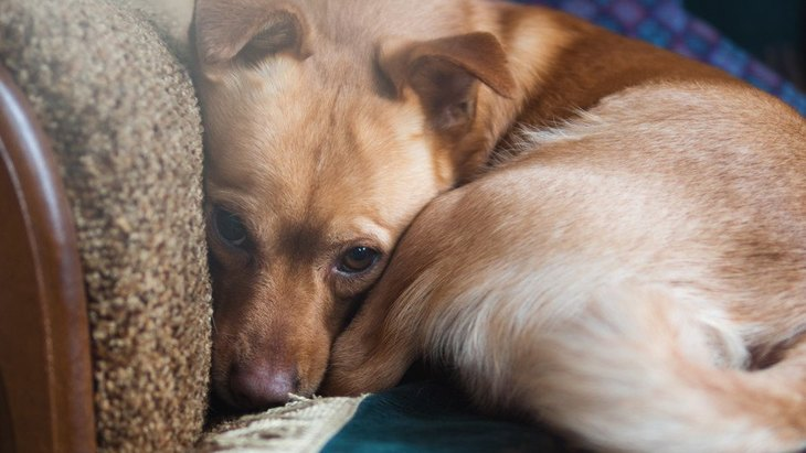 犬が普段よりもおとなしい時に考えている3つのこと