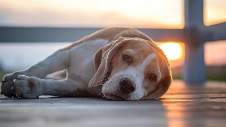 犬の『疲れたサイン』3選!愛犬のしぐさを見逃さないで!