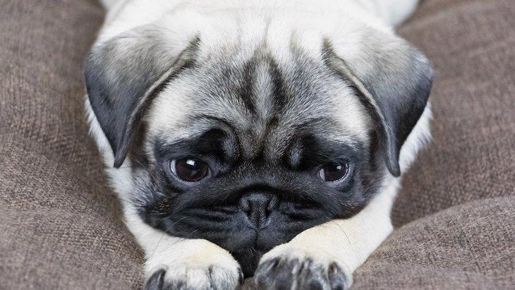 犬はペットホテルや人に預けられるとストレスを感じる?