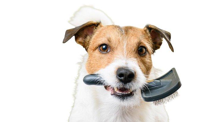 ブラッシング好きな犬にする方法とは?3つのステップで解説!