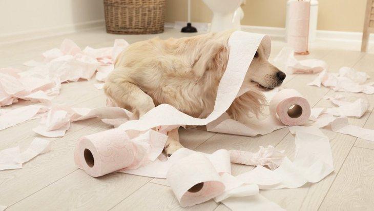 犬がウンチの前後に暴れる…「トイレハイ」になる理由とは?