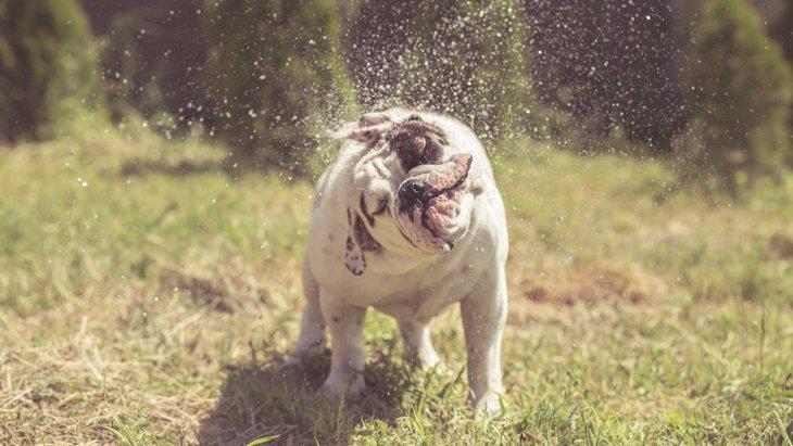 犬が頭を頻繁に振る原因と考えられる病気
