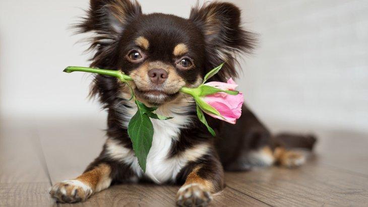 犬が中毒を起こした時の症状と対処法