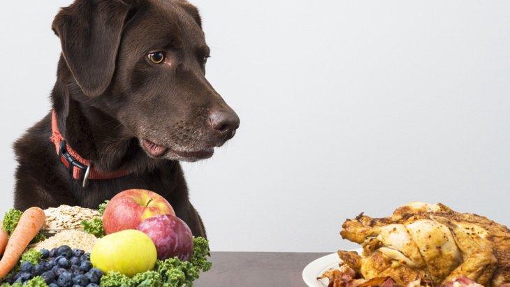 犬は「味オンチ」って本当?