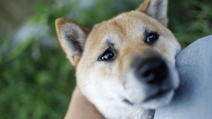 犬が飼い主に気持ちを伝えている『ジェスチャー』5選