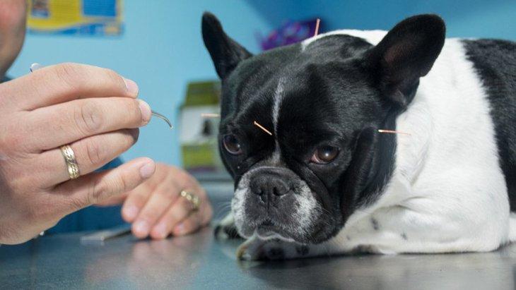犬に鍼灸治療をする効果や平均的な料金、注意点まで