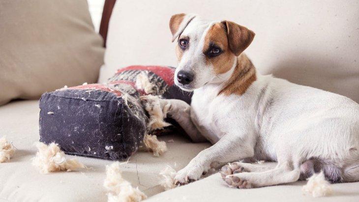 留守番中に犬が物を散らかす理由と4つの対策