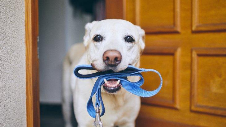 犬が満足できていない『散歩の仕方』とは?NGな理由からやりたい工夫まで解説