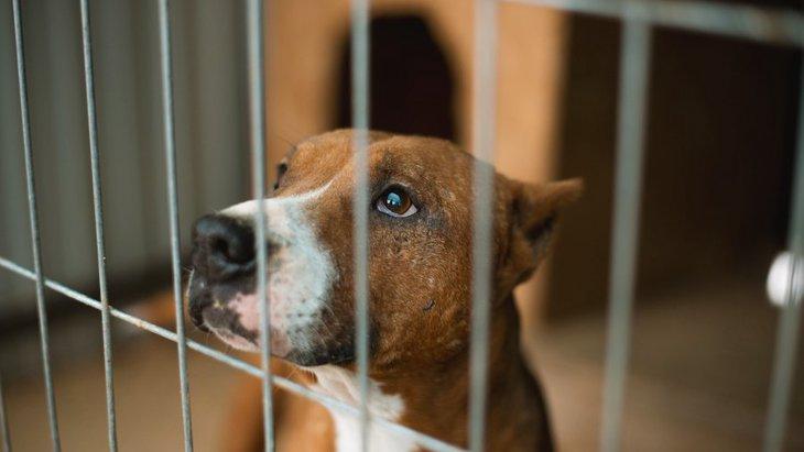 犬の『しつけ』と『虐待』の違いとは?絶対NG行為や正しい知識を身に着けよう