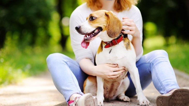 保護犬を飼う時に必ずしなければならない『6つのこと』
