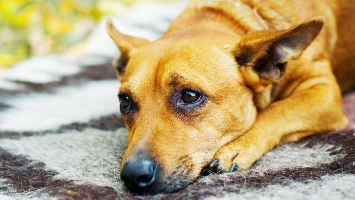 犬が『ため息』をつく時の心理5選!もしかして、愛犬に嫌われてるの?